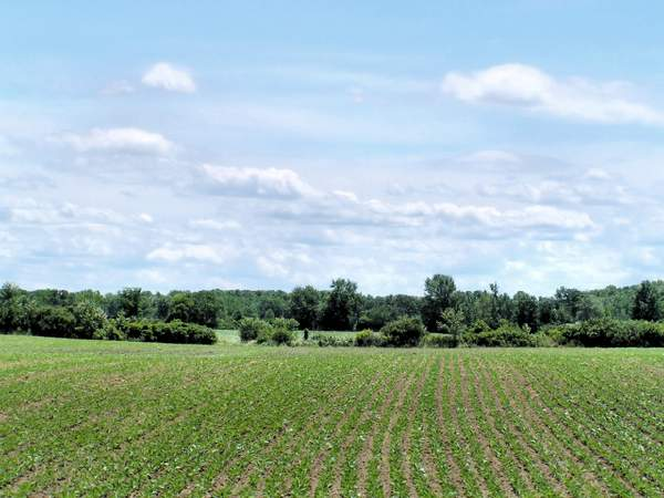 Agricoltura_51.jpg
