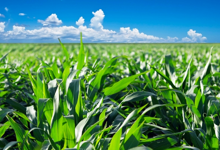 Irrigazione a goccia del mais agronotizie agrimeccanica for Netafim irrigazione