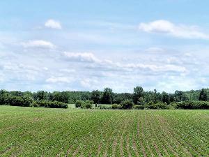 Agricoltura_5.jpg